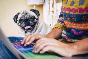 common blog writing distractions